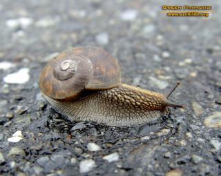 Snail - 2