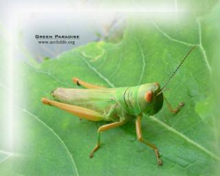Grasshopper - 2