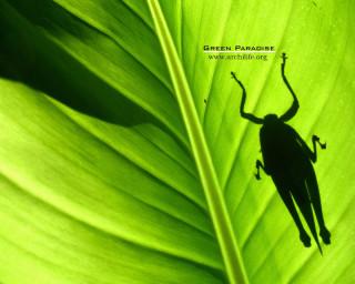 Grasshopper - 3