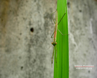 Praying Mantis - 3